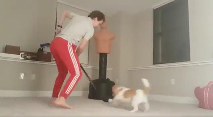Columbuksen Artemi Panarin harjoittelee videolla kikkojaan omaa koiraansa vastaan.